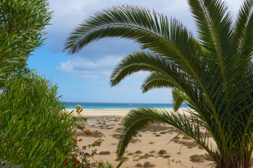 Welcome to Fuerteventura!