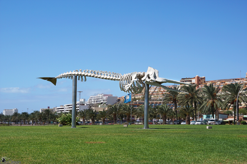 Morro Jable, Skeleton of Sperm Whale, Fuerteventura