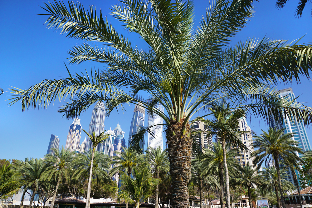 Skyline Marina Bay, JBR Beach