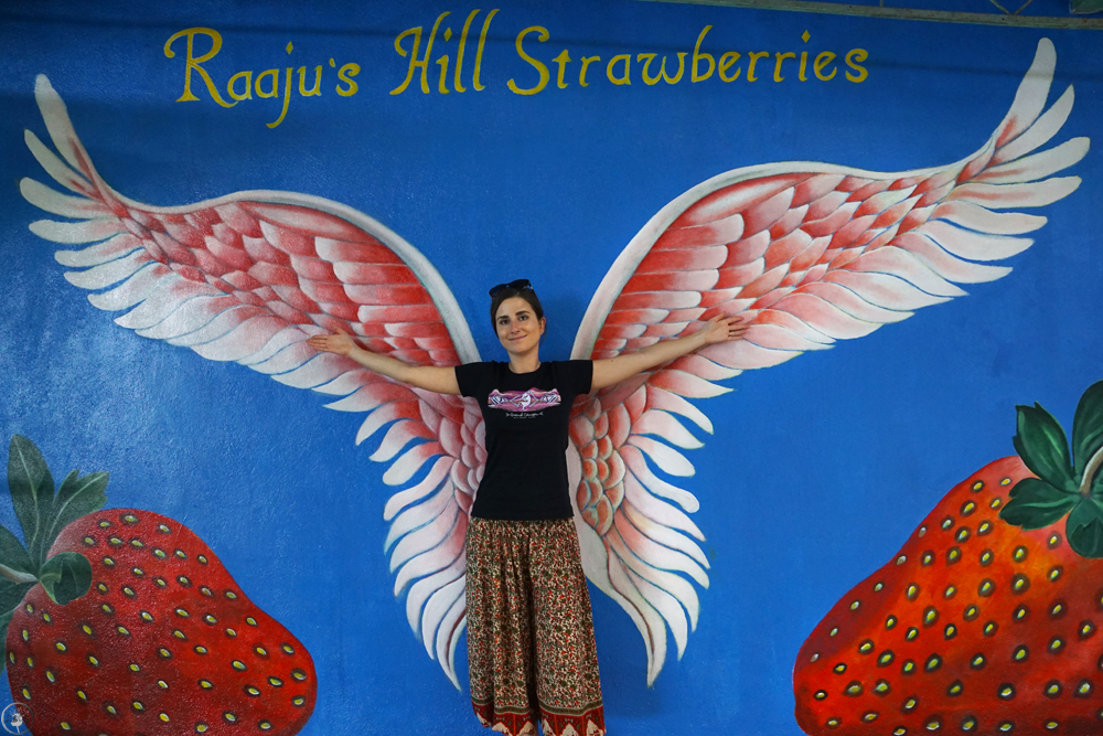 Raajus's Strawberry Farm, Cameron Highlands