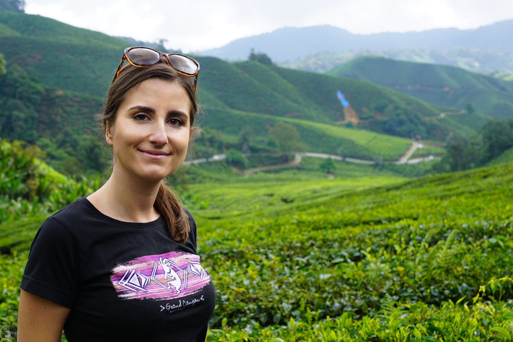 The BOH Tea Plantations, Cameron Highlands
