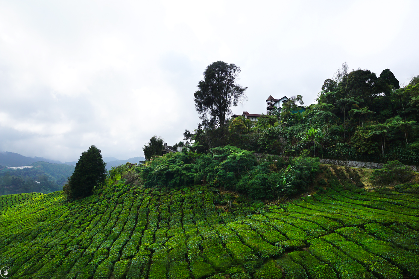 The Tea Plantations, Cameron Highlands
