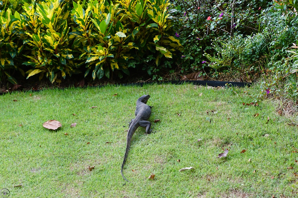 Monitor Lizards, Sentosa