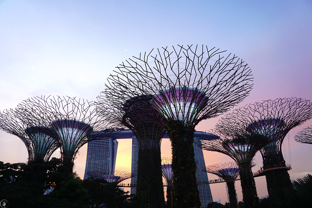 Sunset, Gardens By the Bay, Marina Bay Sand