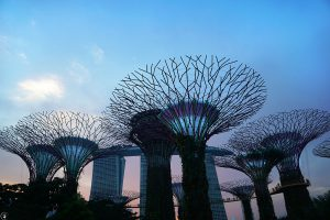 Sunset, Supertrees, Gardens by the Bay