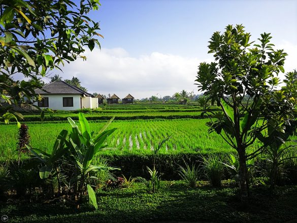 Rice Fields, Masia Villa