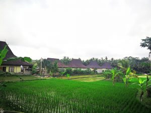 The Rice Fields behind Masia Villa