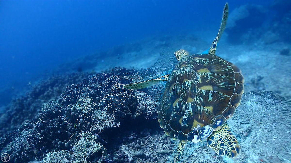 Gili Islands Scuba Diving