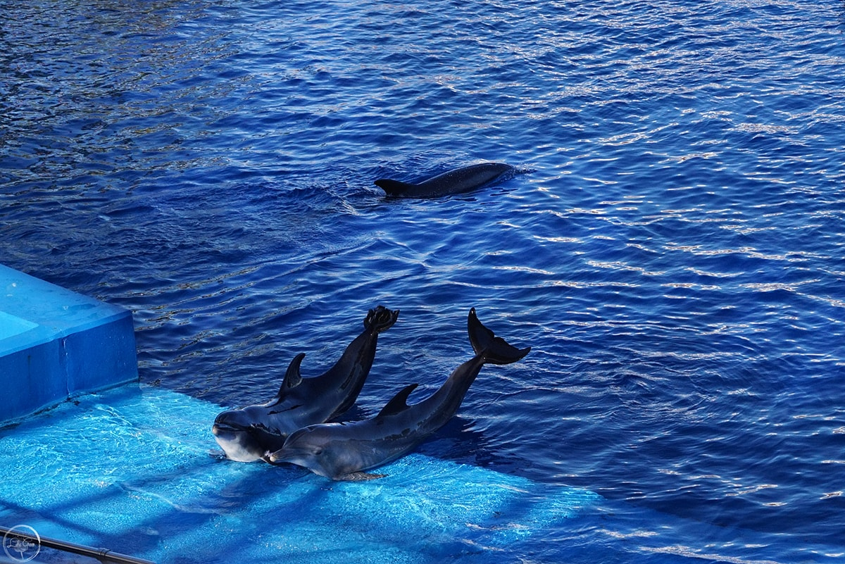 The Dolphin Show, Oceanografic, City of Afrts and Sciences