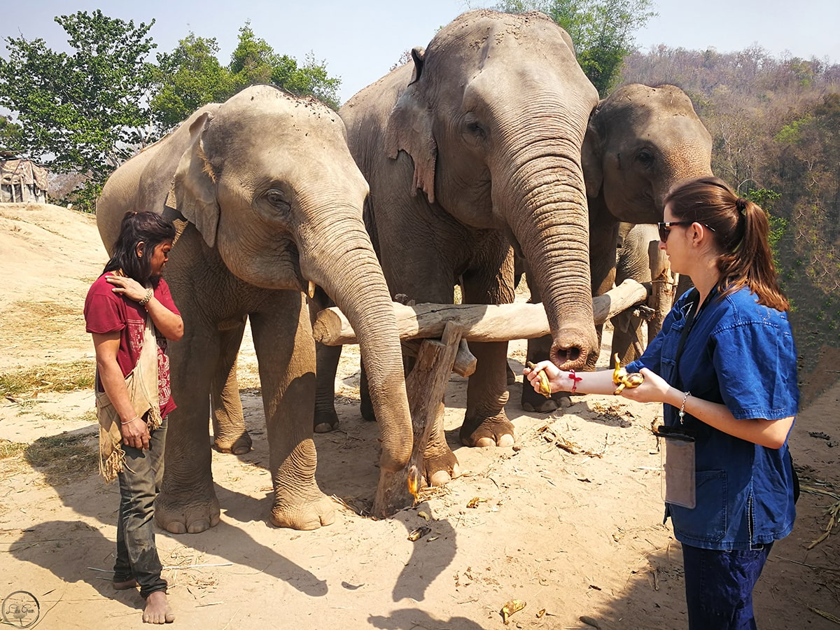 Visiting an Elephant Sanctuary in Chiang Mai