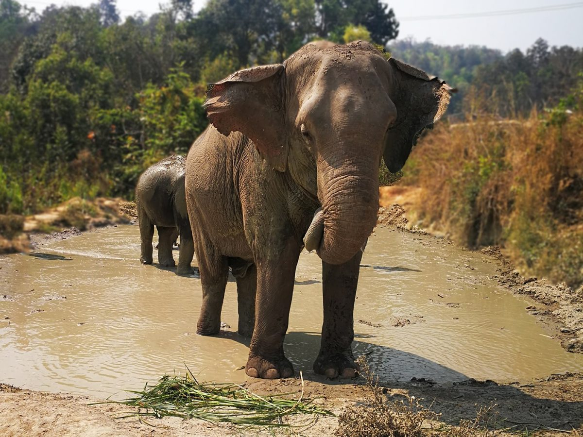 Visiting an Elephant Sanctuary in Chiang Mai, Thailand