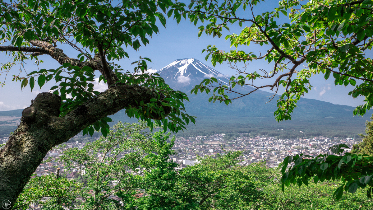 Views over Mt Fuji from Arakurayama Sengen Park