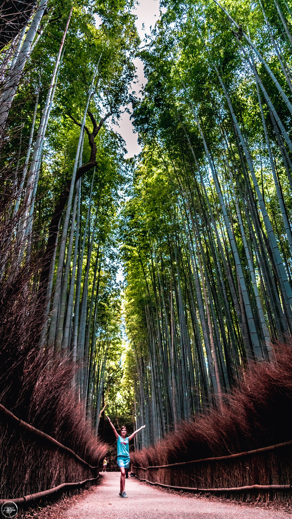 Bamboo Groove Kyoto